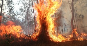 Teaching Children About Bushfires