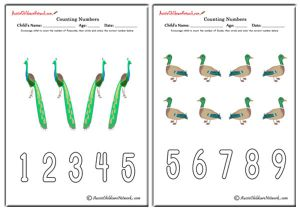 Counting Numbers - Birds Theme