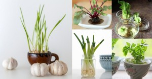 Growing Vegetables Indoors In Water