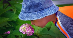 Safe Plants For Early Childhood Services