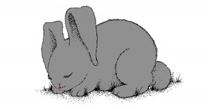 See The Bunnies Sleeping