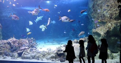 Plan Your Next Excursion To Day and Night On The Reef at Sydney Aquarium